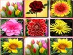Flowers Memory Match