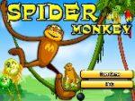 Spider monkey 4
