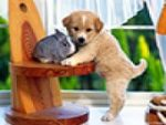 Cute Animals Jigsaw