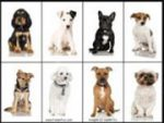 Cute Dogs Memory Game