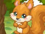 Squirrel Care