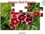 Jigsaw: Red Flowers